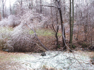 Ice Storm 2008-Photo 2 (Hickoff)